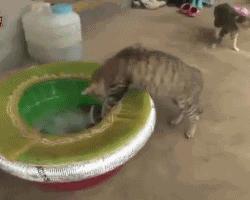 Czo ta ryba?