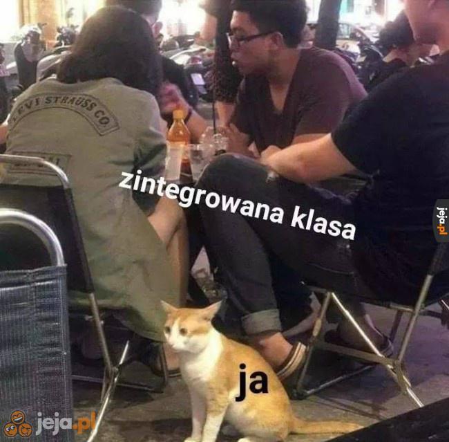 Jestem kotem, a co?