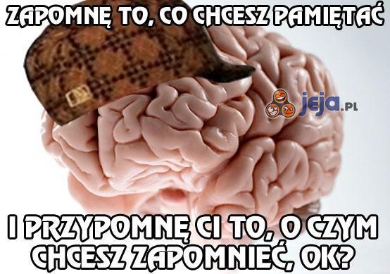 Mój mózg to sadysta