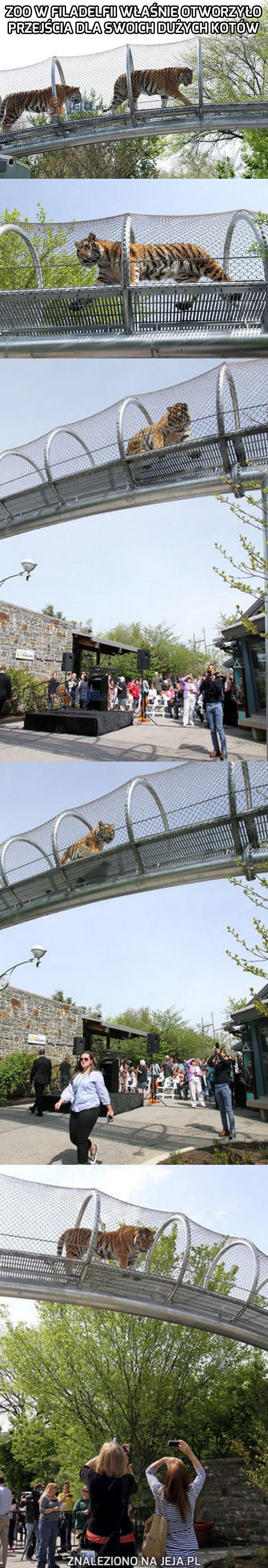 Niesamowita atrakcja w zoo