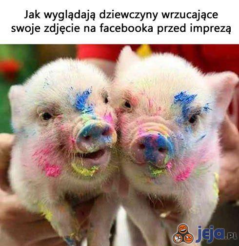 Modżajto dla mojej świni
