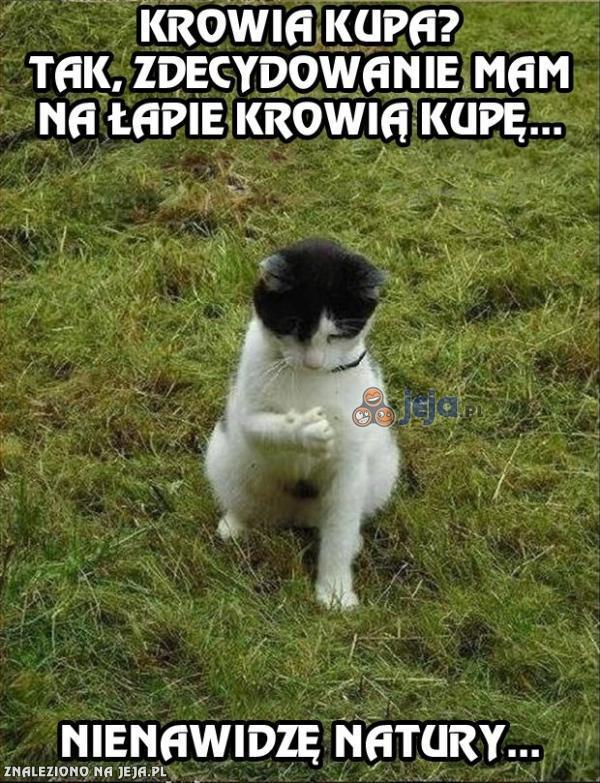 Gdzie łazisz koteł?