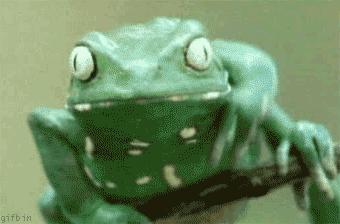 Cacy żabka, cacy