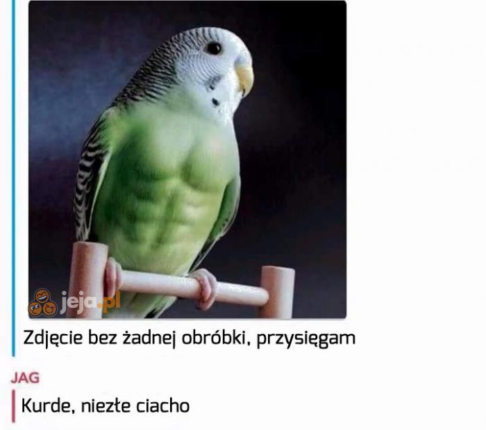 Kiedy papuga ma większe powodzenie niż Ty