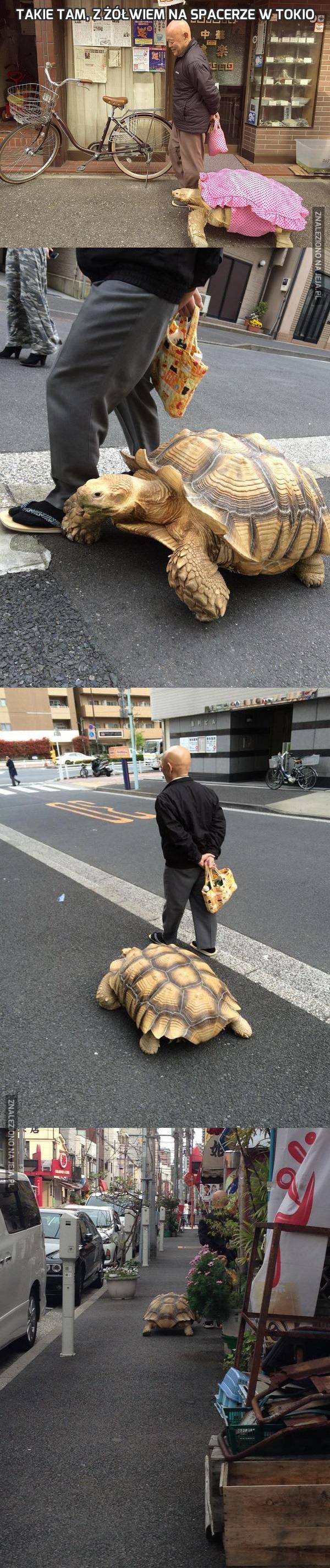 Takie tam, z żółwiem na spacerze w Tokio