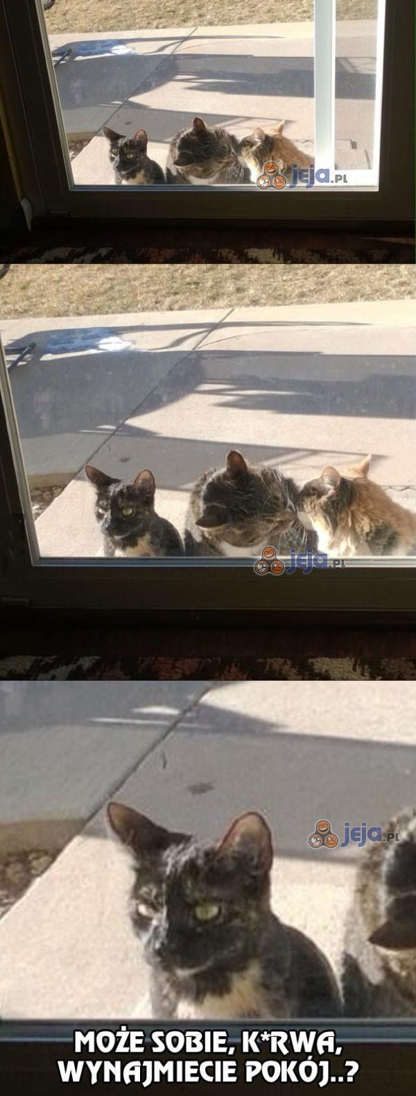 Zazdrosny jesteś koteł?