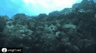 Ocean go porwał