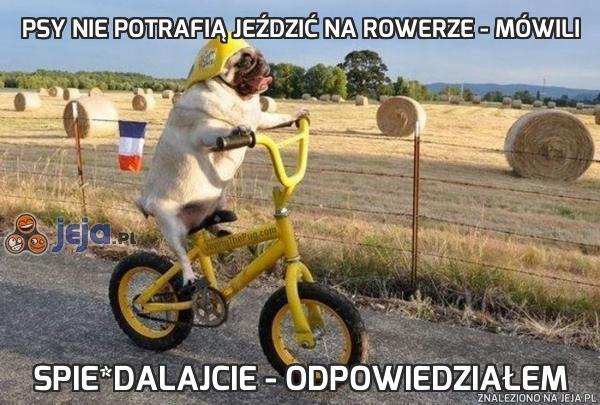 Psy nie potrafią jeździć na rowerze - mówili
