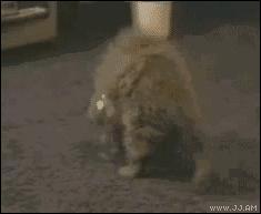 Koty to ciecze, przybierają kształt naczynia do którego się je wlewa