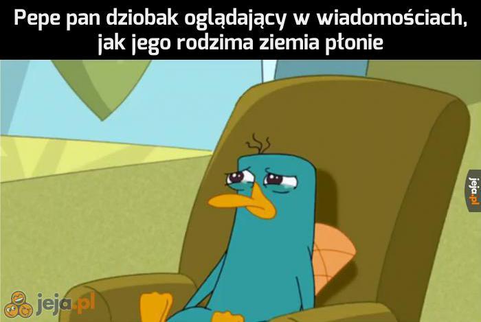 Biedny Pepe
