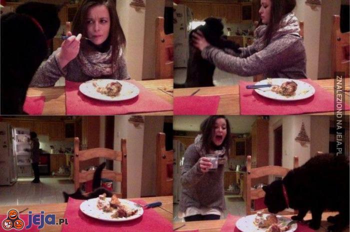 Codzienne życie z kotem