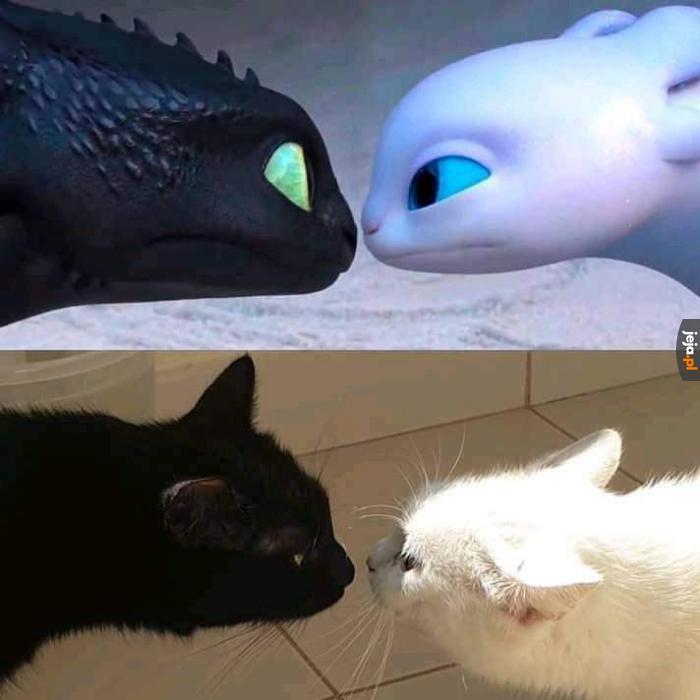 Widać podobieństwo