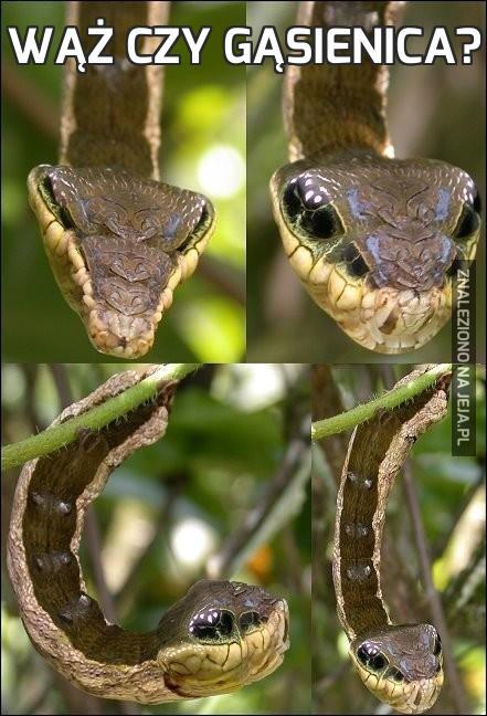Wąż czy gąsienica?