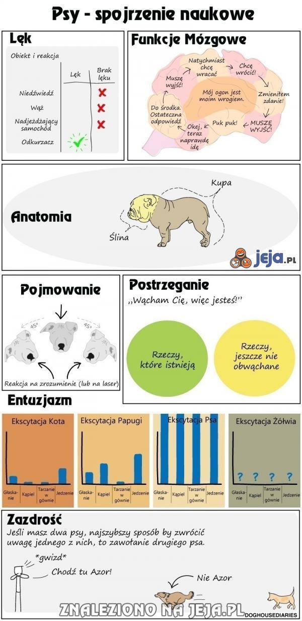 Psy - spojrzenie naukowe