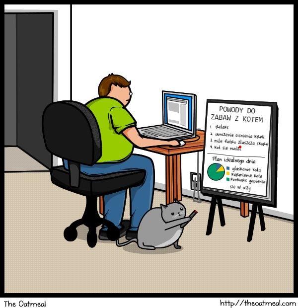 Powody do zabawy z kotem