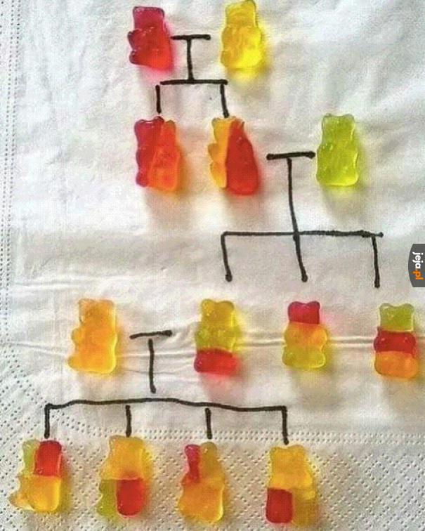 Misiowe drzewo genealogiczne