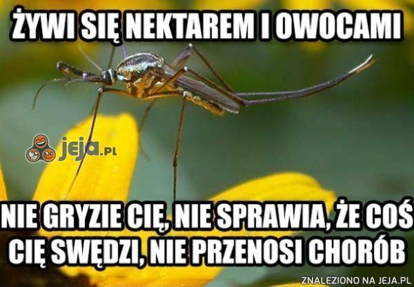 Samiec komara