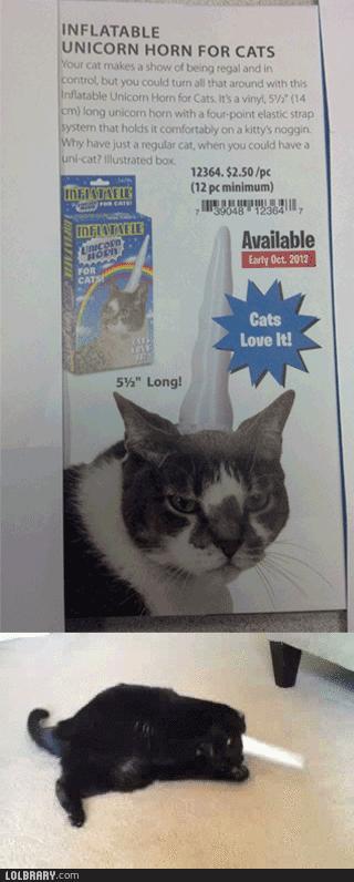 """""""Twój kot to pokocha"""" - czy aby na pewno?"""
