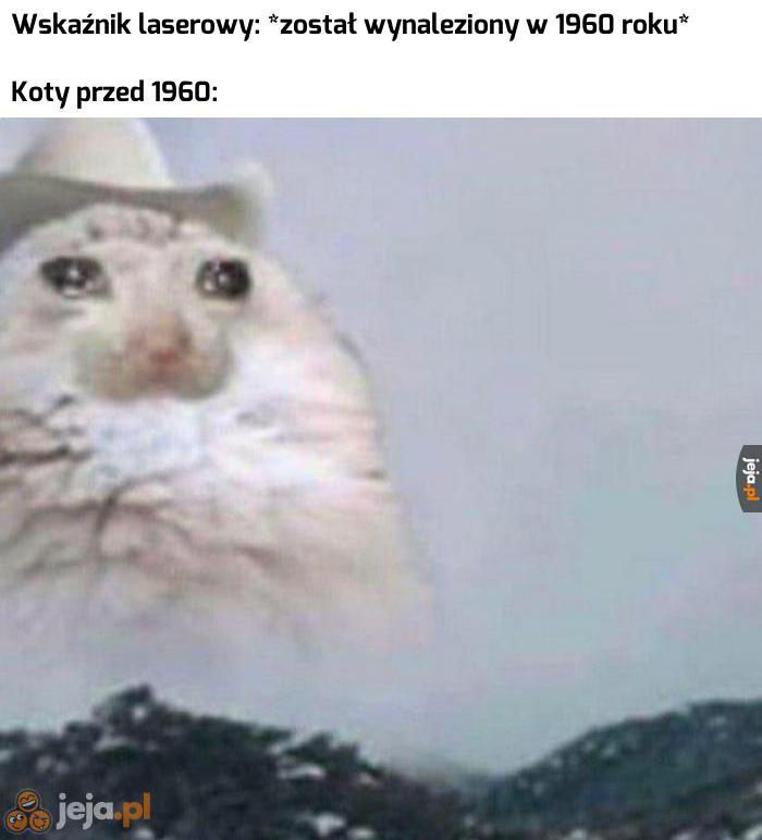 Jakie smutne były koteczki