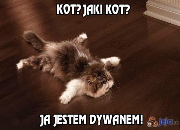 Kot? Jaki kot?