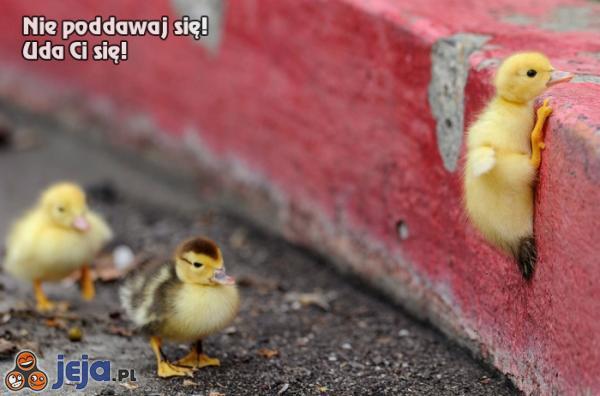 Nie poddawaj się! Uda Ci się!