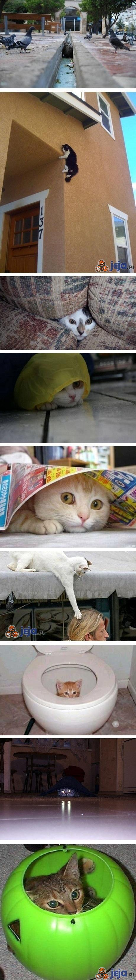 Koty - myśliwi doskonali