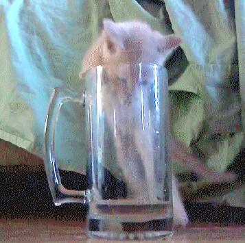 Kiedy budzisz się na ostrym kacu i znajdujesz resztki piwa