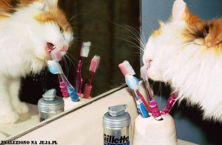 Twój kot myłby ząbki
