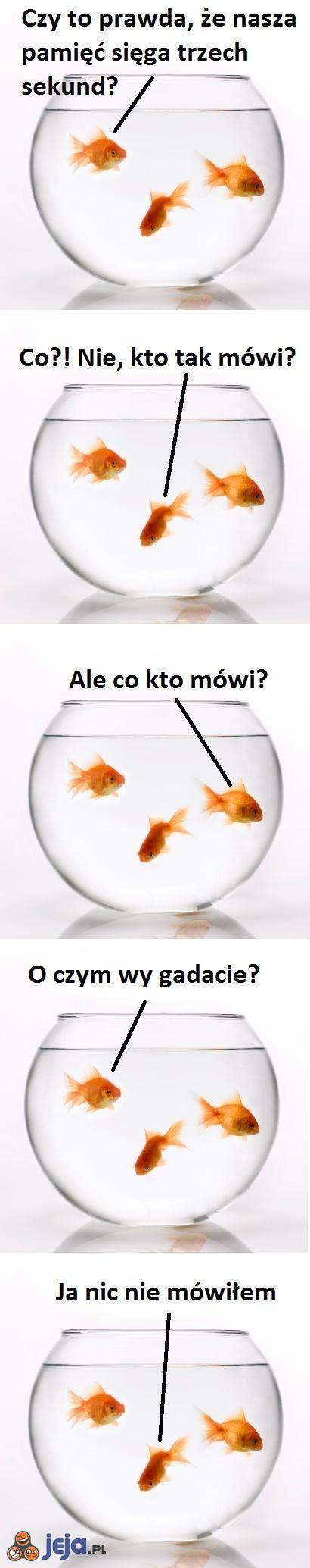 Pamięć złotej rybki