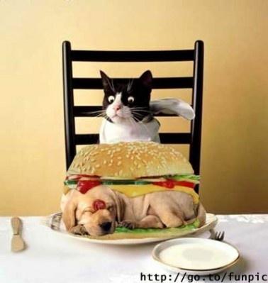 Śniadanie Kotka