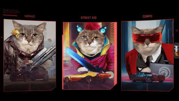 Jakim kotem jesteś?