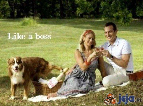 Piknik z psem