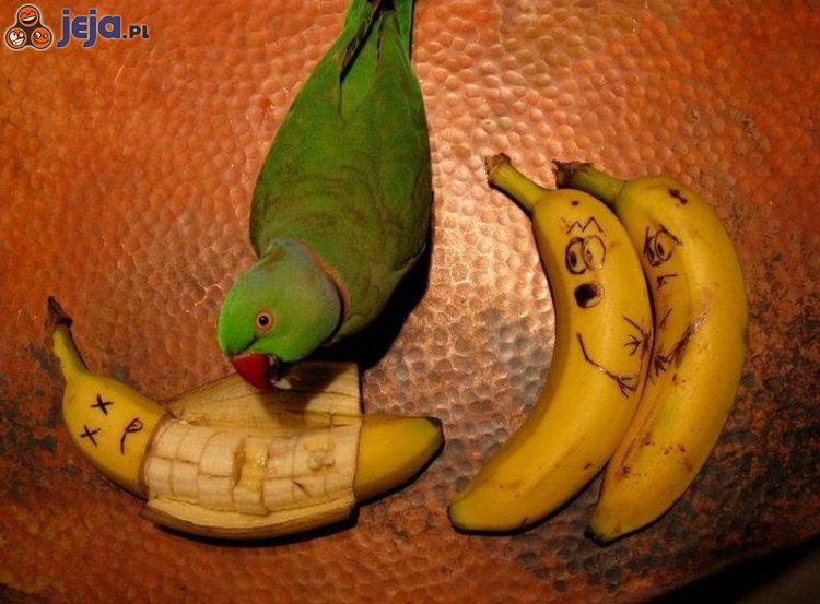 Papuga - terrorysta