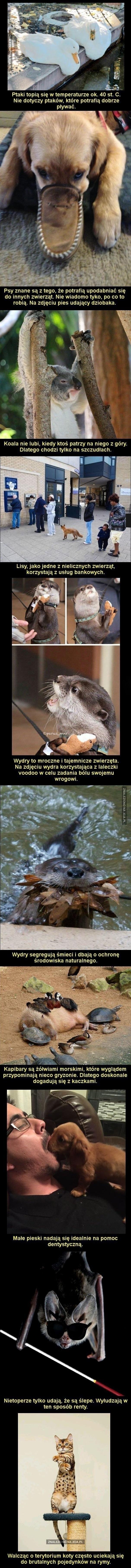 Fakty o zwierzętach