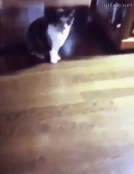 Kot.exe przestał działać