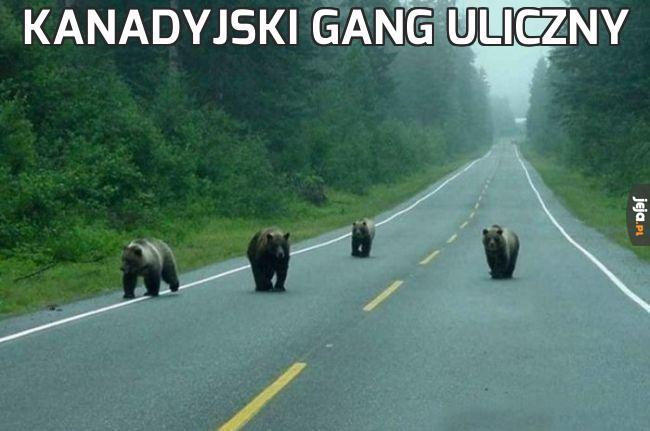 Kanadyjski gang uliczny