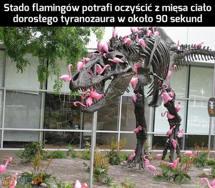 Strzeż się flamingów