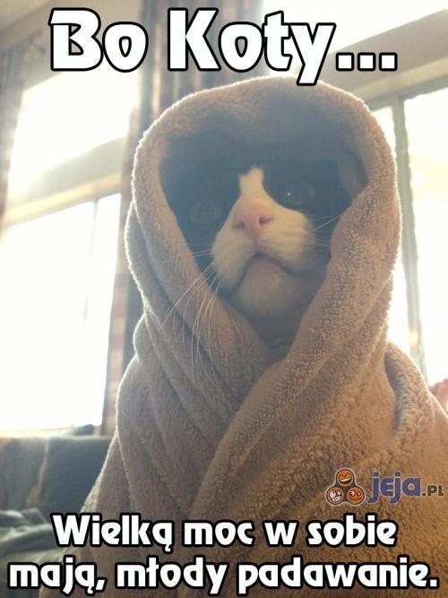 Bo koty...