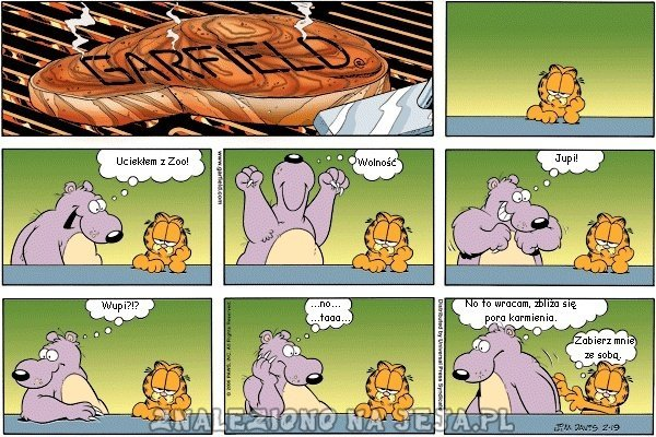 Garfield spotkanie z niedźwiedziem