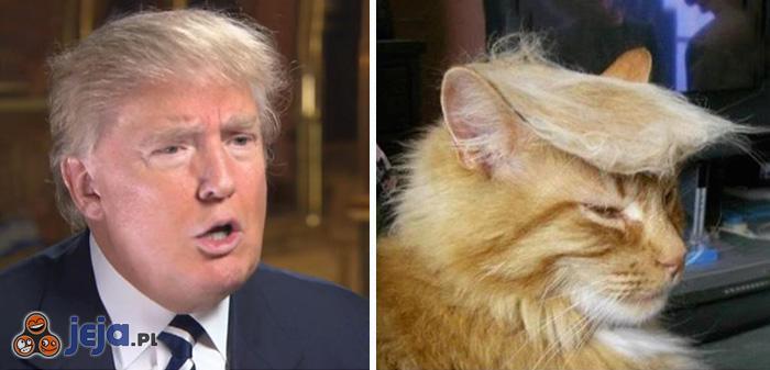 Trumpy Cat