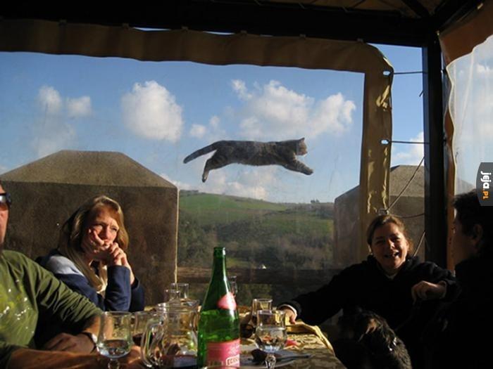 To tylko latający kot, przewijaj dalej