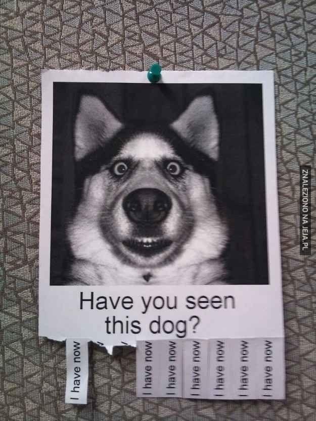 Czy widziałeś tego psa?