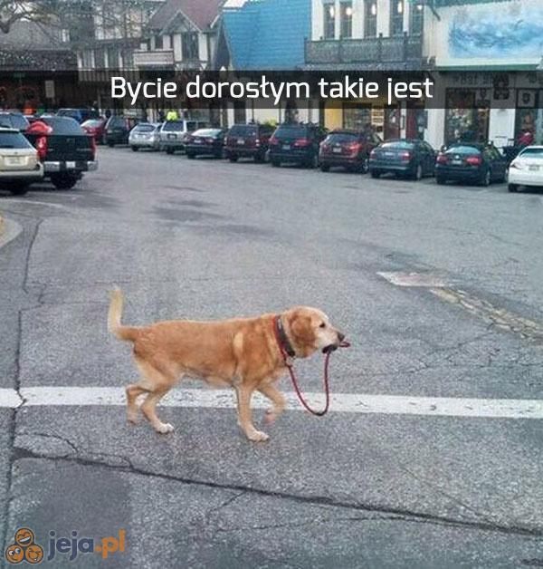 Wy się śmiejecie, a to bardzo mądry pies jest