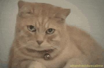 Kiedy już jestem w toalecie, a nie ma papieru