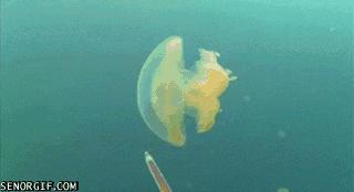 Meduza w chmurze