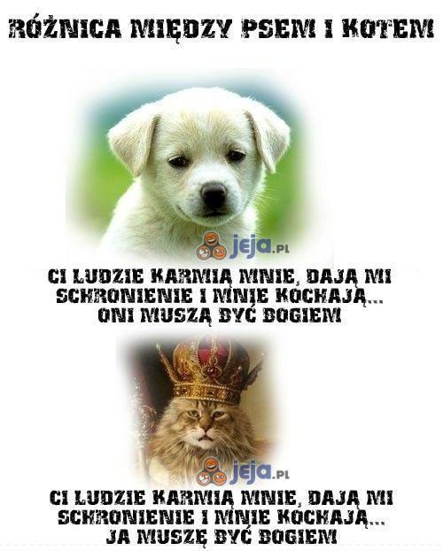 Różnica między psem i kotem