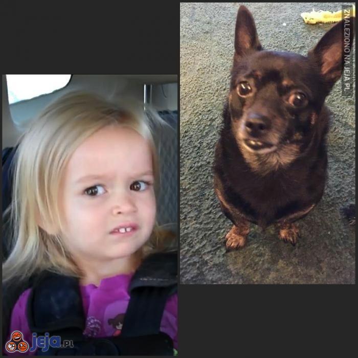 Pies podobny do właściciela...?