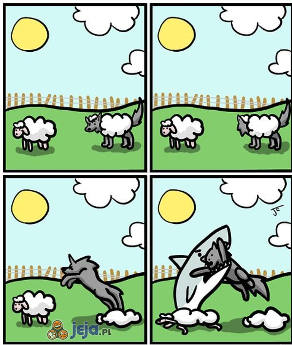 Pechowy wilk na polowaniu