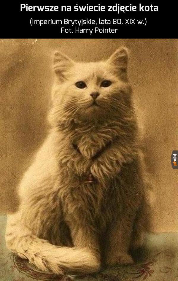 """Kot nosił dumne miano """"Szach"""""""