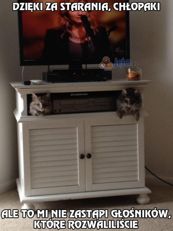 Kocie stereo w telewizorze